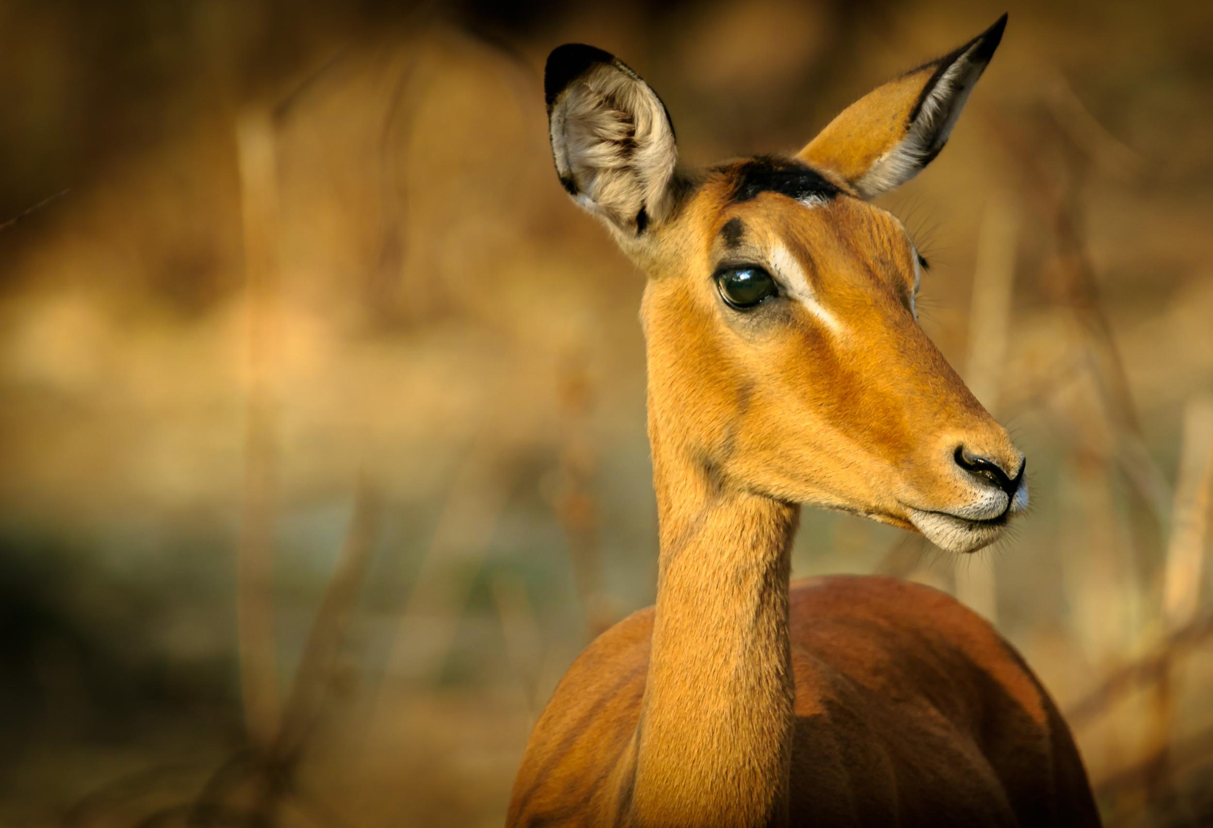 Animal Photography – How to Take Amazing Animal Photos