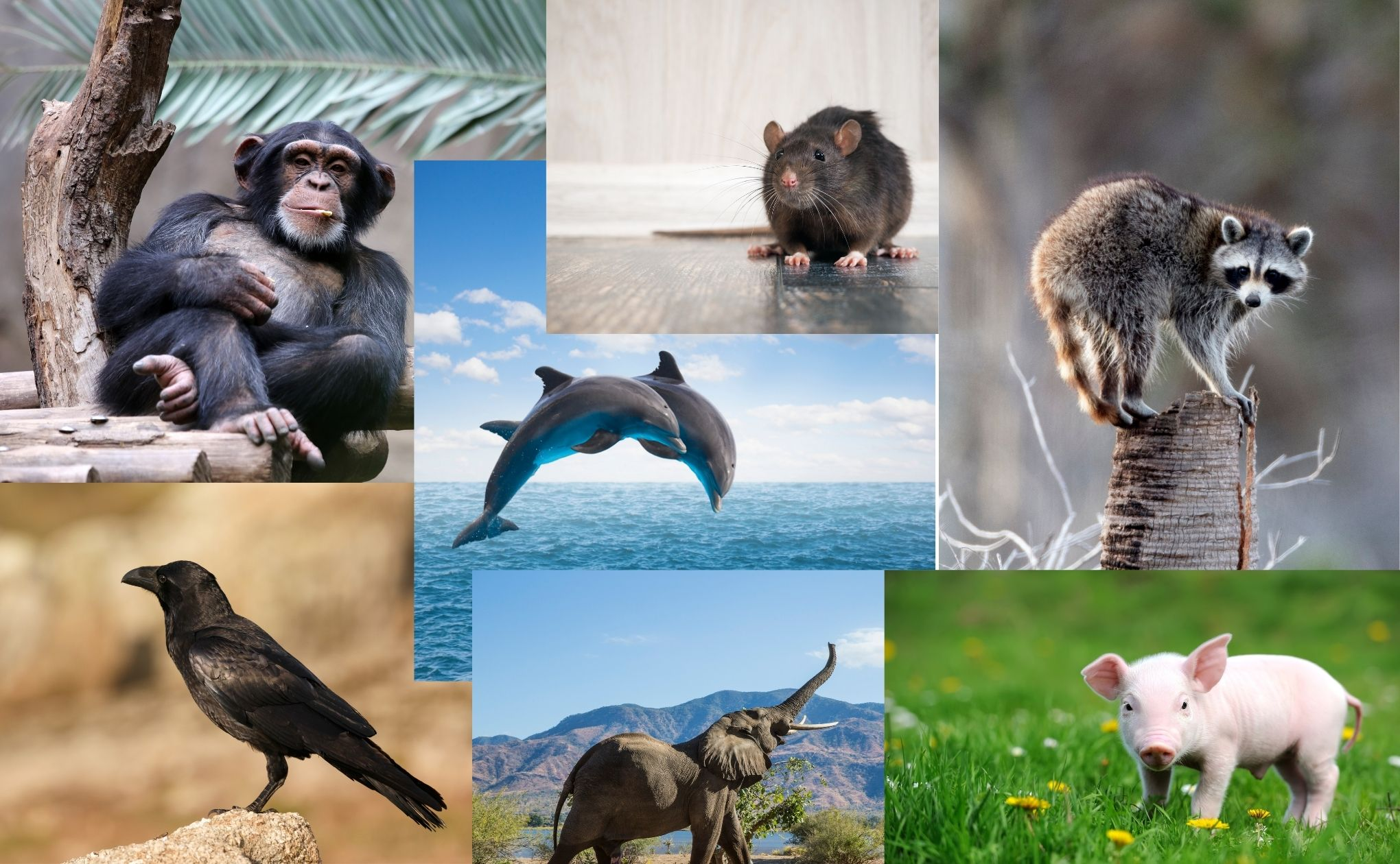 The Most Intelligent Animals After Human