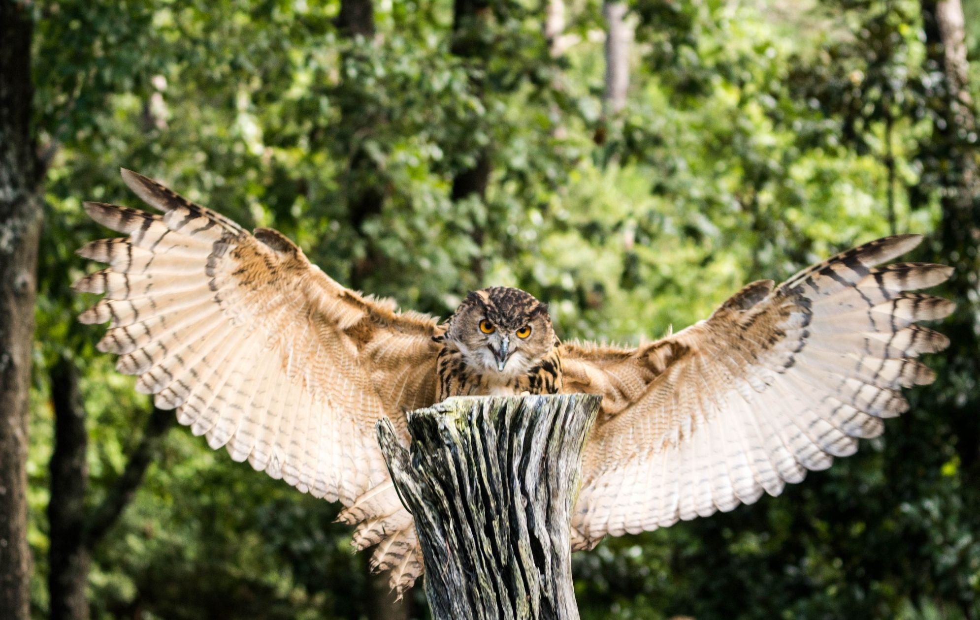 Let's get introduce with Wise Owl